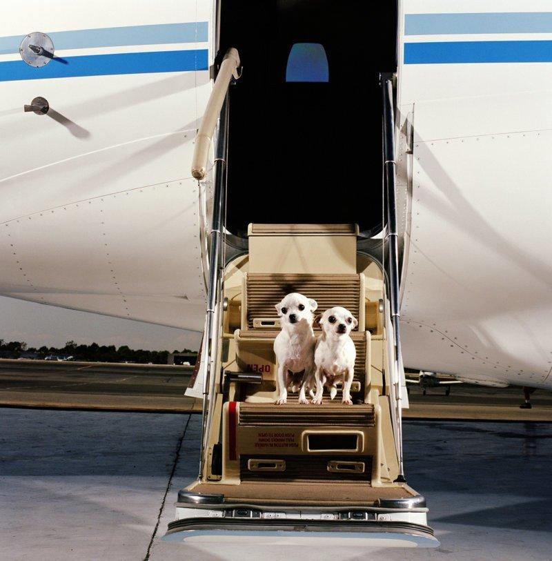 менее, перевозка животных самолетом картинки этой лекции профессиональный